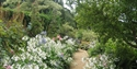 PASHLEY MANOR GARDENS early August borders by Kate Wilson (3)