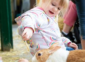 Children playing with rabbits at the Rare Breed Centre in Ashford, Kent