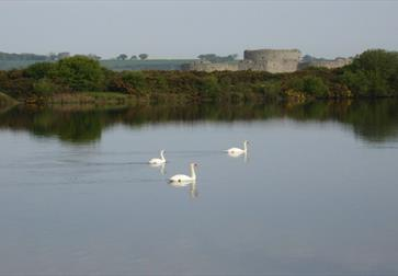 Camber Castle Wildlife Walk - Rye Harbour