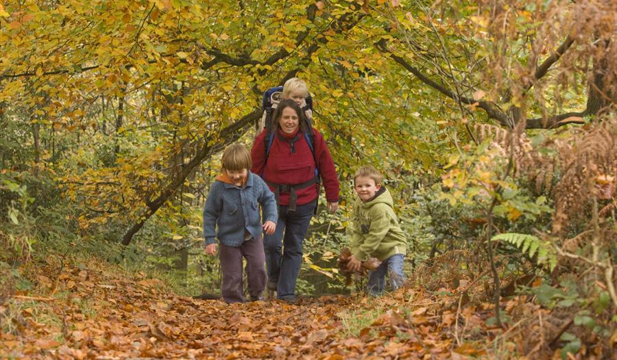 Autumn Colours and Forest Art, October Half Term family fun