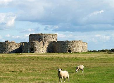 Camber Castle guided tours