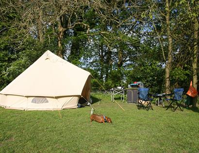Dogwood Cottage Caravan and Campsite