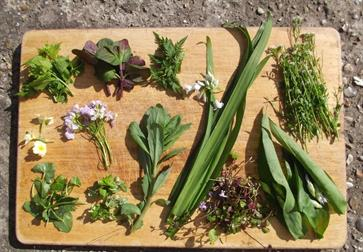 Spring foraging workshop